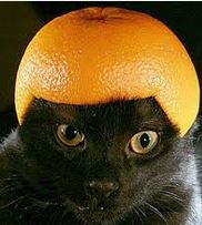 black-cat-fruit